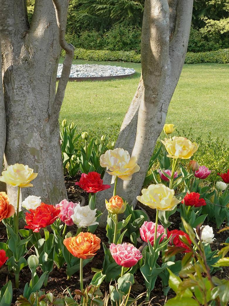 Cura del giardino, Studio Paesaggistico MaMa